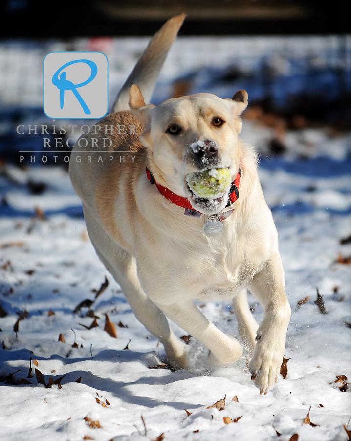 Roxy on the run