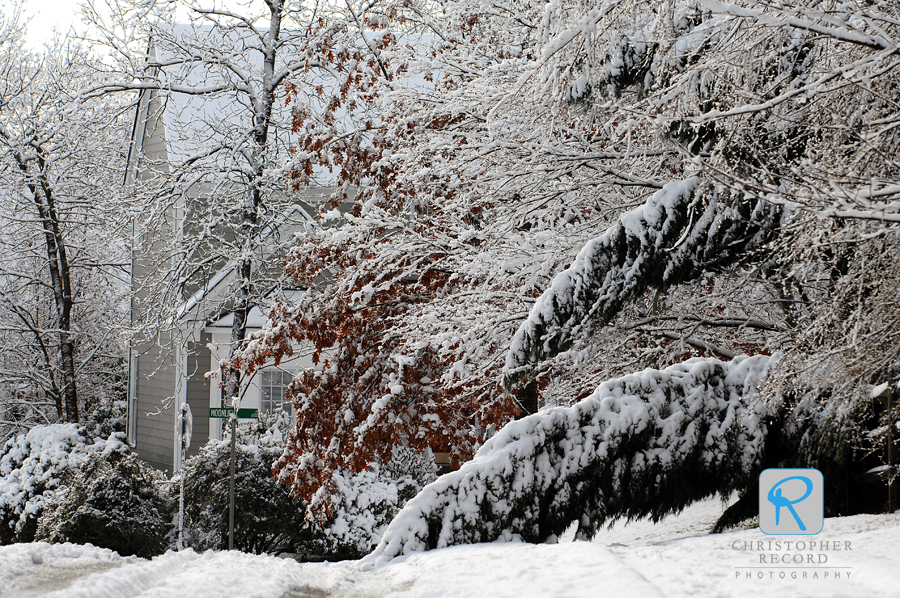 A heavy, wet snow clings to branches