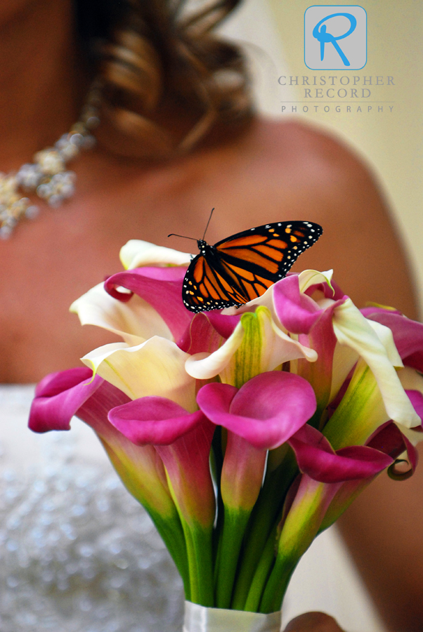 Spring is time butterflies, flowers and brides