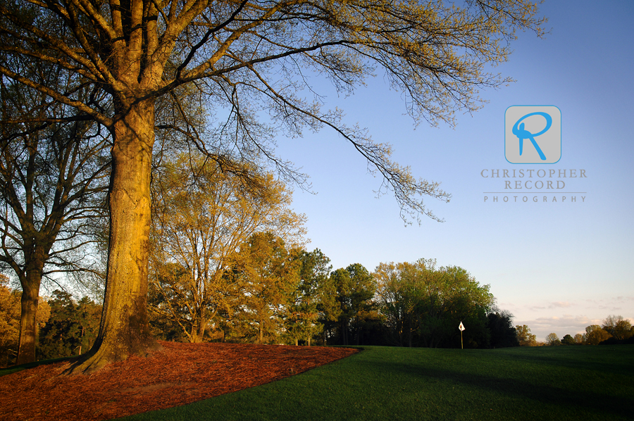 Early morning light paints a golden hue on a tree beside the 16th green at Quail Hollow